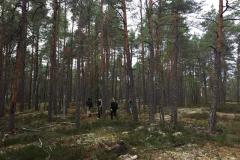 Národní park Tyresta